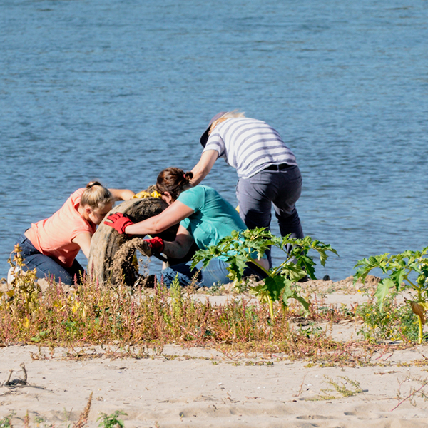 Rhein Clean up bei der Arbeit am Rhein in Zons